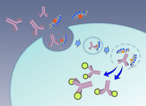 Macromolecules and Behavior
