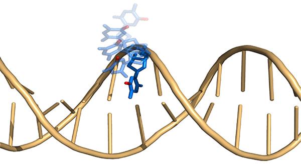メチル基1つでDNAの運動性が変わることを解明 -運動性というDNA上の ...